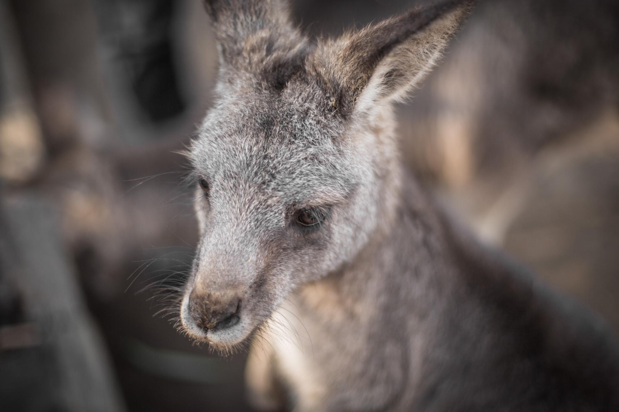 Tasmania-2015-15