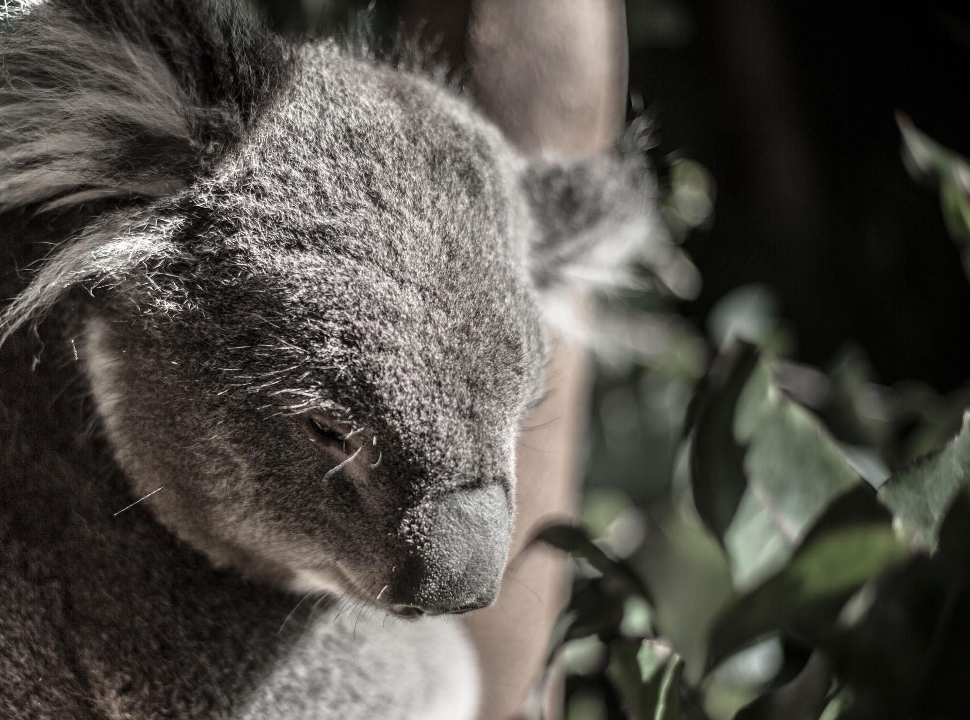 Tasmania-2015-17